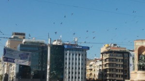 The explosion terrified the pigeons into flight